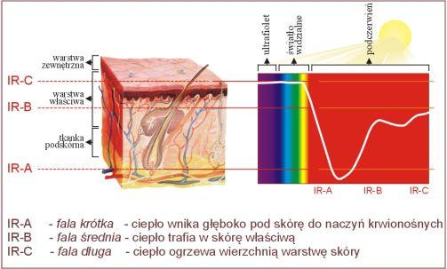 Obrazek przedstawia zakres fal jak głęboko wnikają w ciało